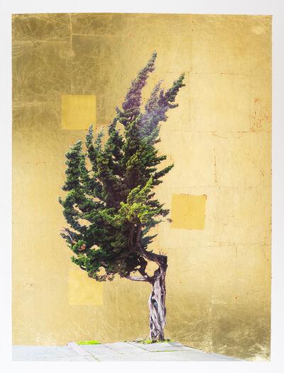 Daniel Ballesteros, 'Gold Leaf Tree No. 116', 2019