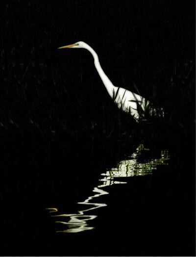 Cheryl Medow, 'Great Egret', 2006