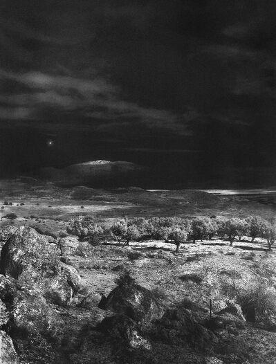 Neil Folberg, 'Olive Grove', 1998