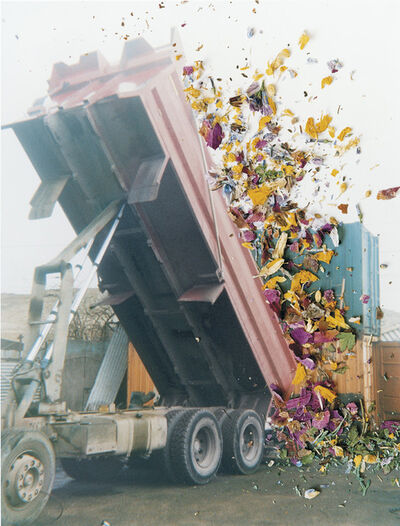 Stephen Gill, 'Untitled, from the series 'Hackney Flowers'', 2005