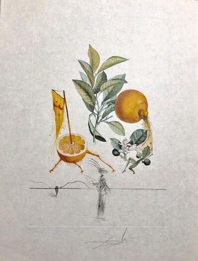Salvador Dalí, 'Grapefruit', 1969