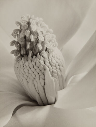 Imogen Cunningham, 'Magnolia Blossom (Tower of Jewels)', 1925-probably printed in the 1940s or 1950s