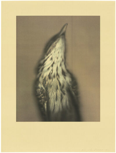 Ann Hamilton, 'Long-tailed Koel', 2021