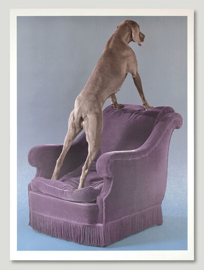 William Wegman, 'Overview', 1993