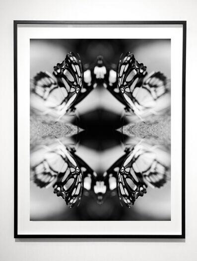 Indira Cesarine, 'Papiliones No 6 ', 2016