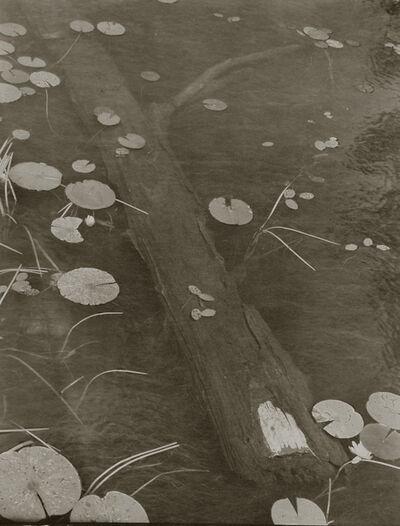 Koichiro Kurita, 'Wood and Water Lily', 1998