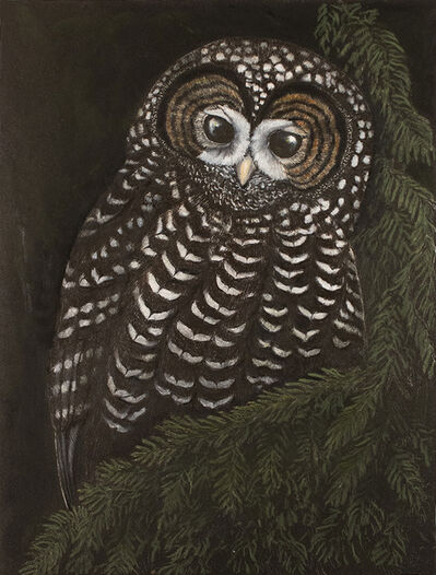 Tony Angell, 'Ancient Forest Spotted Owl', 2021