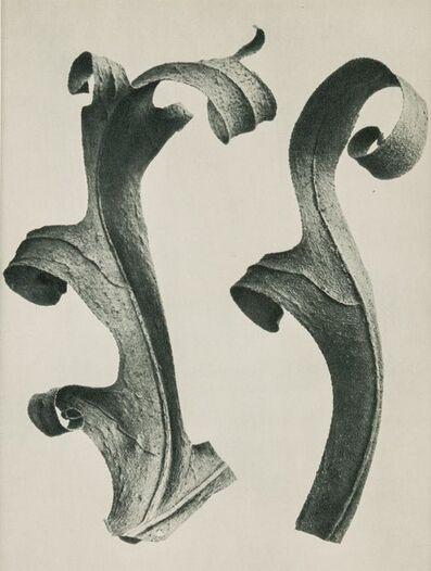 Karl Blossfeldt, '27 Book Plates from Urformen Der Kunst', 1941