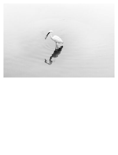 Robert Zhao Renhui, 'Natural History (Egret)', 2018