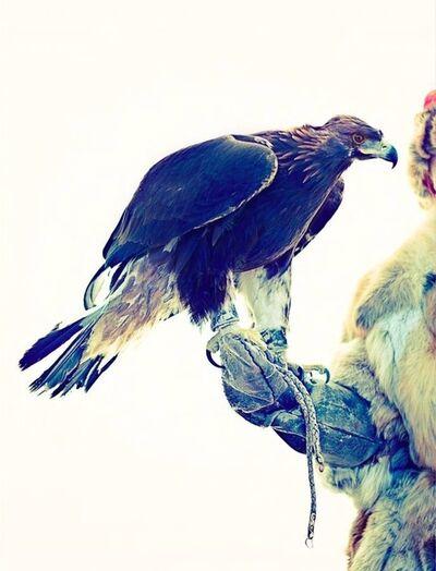 Lyle Owerko, 'Eagle Hunter 11'