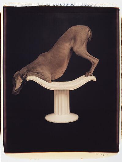 William Wegman, 'Posed on Pedestal', 1994