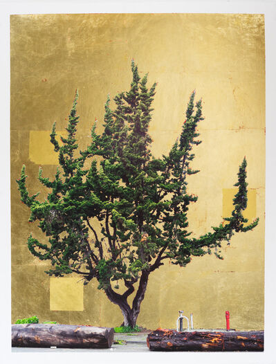 Daniel Ballesteros, 'Gold Leaf Tree No. 115', 2019