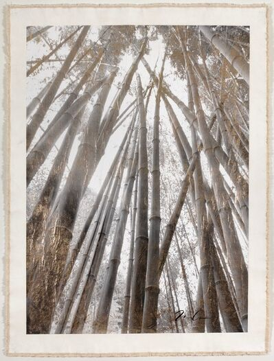 Bill Claps, 'Bamboo Canopy', 2015