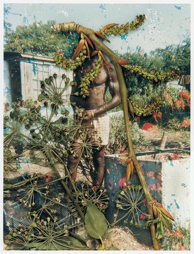 Stephen Gill, 'Hackney Flowers', 2004-2007