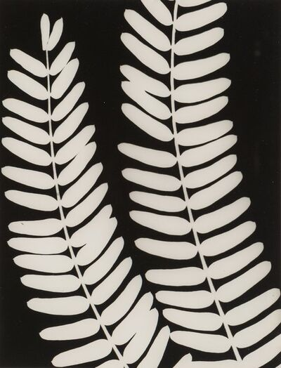 Unknown Artist, 'Untitled (Fern)', 1940