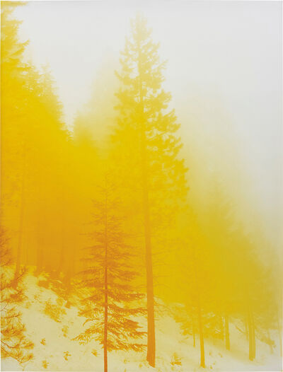 David Benjamin Sherry, 'Lemurian Morning Wood', 2011