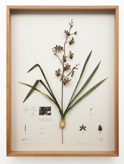 Alberto Baraya, 'Herbario de Plantas Artificiales / Nova Brasiliensis', 2010