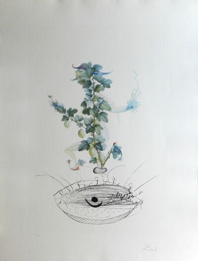 Salvador Dalí, 'FlorDali/Les Fruits Gooseberry', 1969