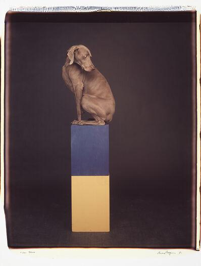 William Wegman, 'Over Blue', 1991