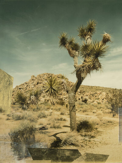 Christine Flynn, 'Joshua Tree', 2018