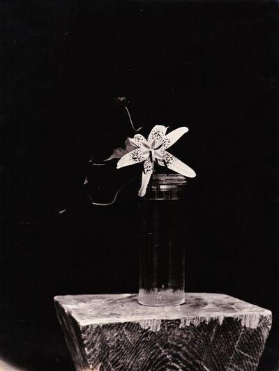Constantin Brâncuși, 'Lily', 1933