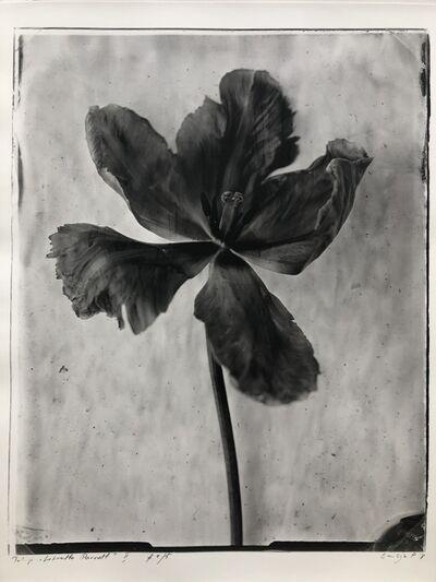 "Emilija Petrauskiene, 'Tulip ""Libretto Parrot"" II', 2018"