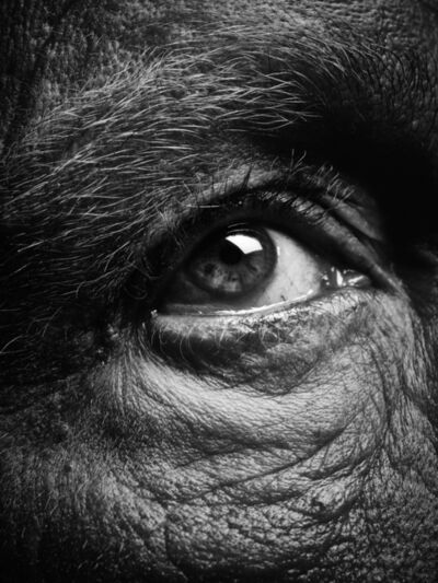 Sandro Miller, 'Bill Brandt / Eyes (1960-1964)', 2014