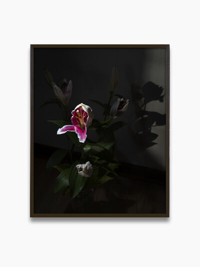 Res, 'Lily (Night) ', 2020