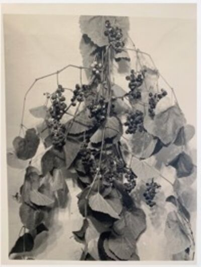 Anon, 'Grapes Apart, with Leaves', ca. 1915