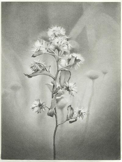 Mary Reilly, 'Wildflower, Jamaica Bay', 2011