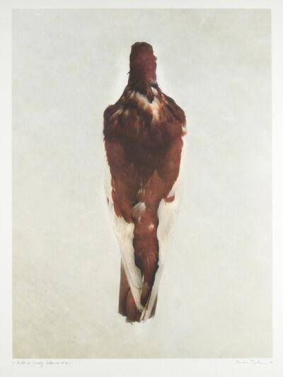 Brandon Ballengée, 'DP 15.2 Red Magpie Tumbler', 2003-2009