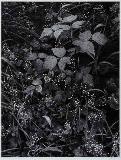 Ansel Adams, 'Trailside, Near Juneau, Alaska, 1947-1948'