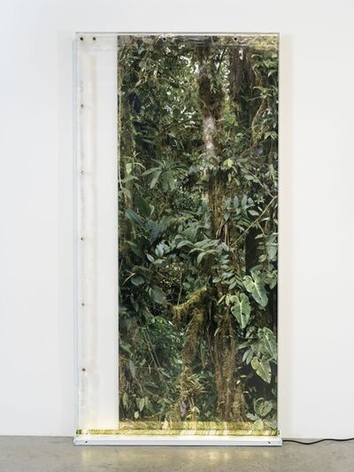 Virginia Overton, 'Untitled (Welcome to the Jungle)', 2019