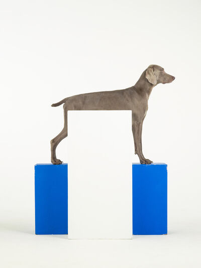 William Wegman, 'White Out', 2014
