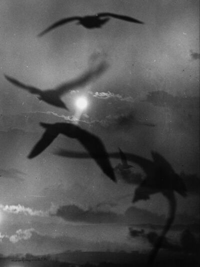 Mario Giacomelli, 'Untitled (seagulls)', 1984