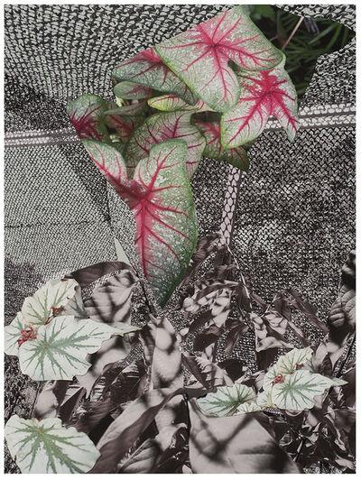 Sandi Haber Fifield, 'BE20_386', 2020