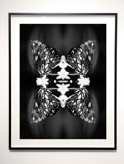 Indira Cesarine, 'Papiliones No 9 ', 2016