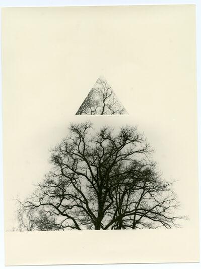Bruno V. Roels, 'Making Trees Great Again', 2018