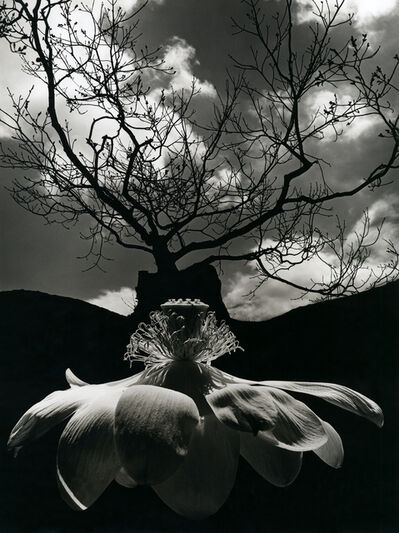 Jerry Uelsmann, 'Untitled (Blossom and Tree)', 1968