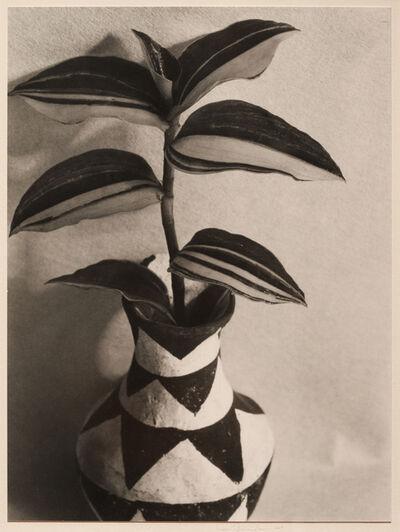 Imogen Cunningham, 'Wandering Jew', 1920