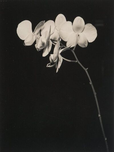 Unknown Artist, 'Orchids', 1993