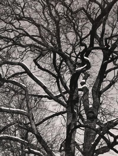 Jane Hinton, 'Trees #1', 2014