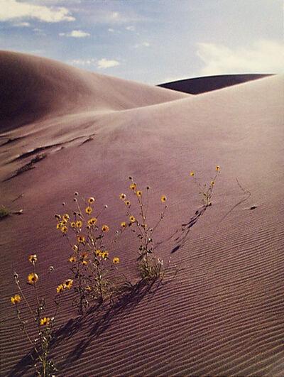 Eliot Porter, 'Sunflower and sandune, Colorado', 1959