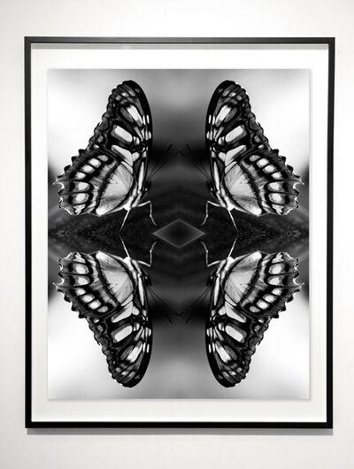 Indira Cesarine, 'Papiliones No 5 ', 2016