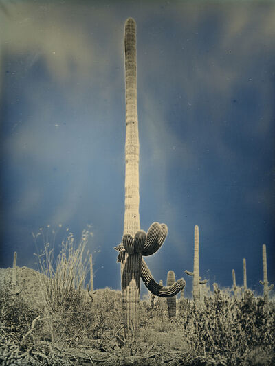 Binh Danh, 'Untitled cactus #2, Saguaro National Park, Arizona  April 6, 2014', 2014