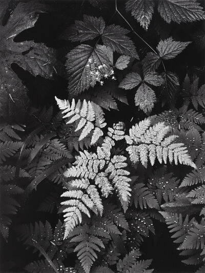 Ansel Adams, 'Leaves, Mt Rainier, National Park, Washington', 1942