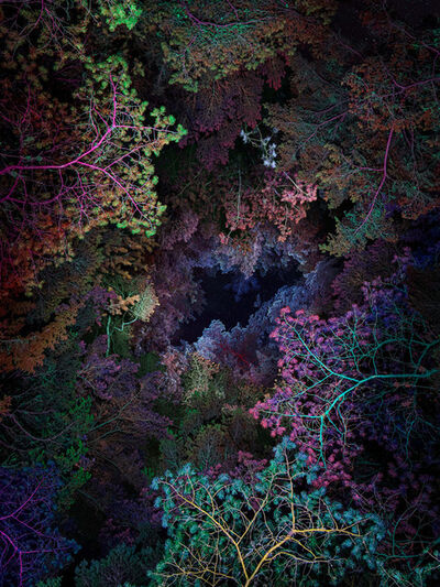 Linda Westin, 'Illuminated Dendrology - Tunneling 1'