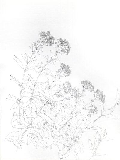 Ashley Yeo, 'Japanese Sweet Meadow', 2019