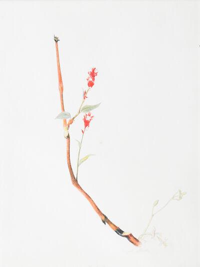 Joseph Stella, 'Marguerites and Wild Flowers', 1919