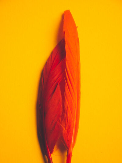 Maria Piessis, 'Feather or Not 2'